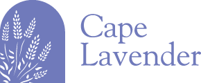 Cape Lavender